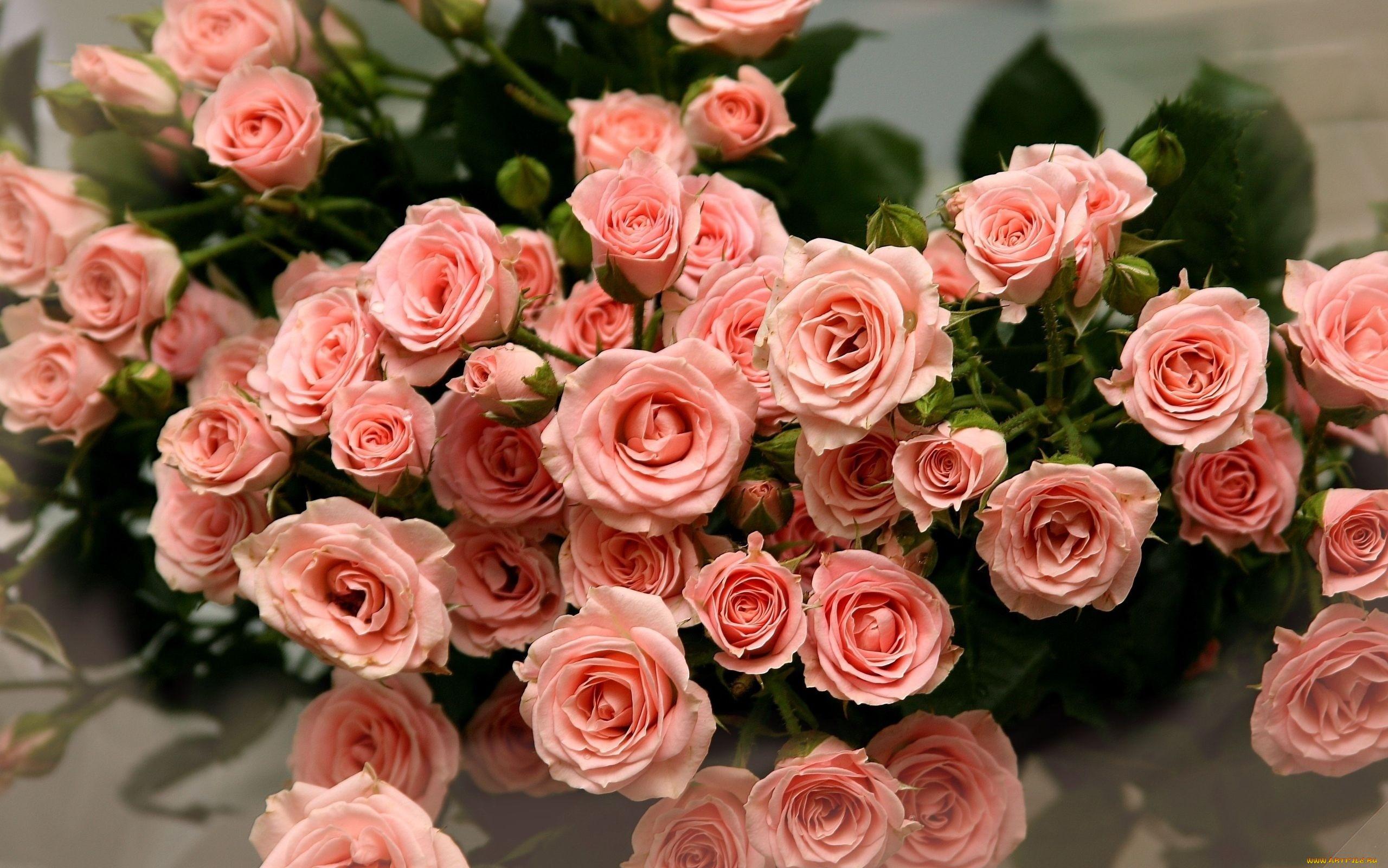 Розовые розы цветы розовый букет pink